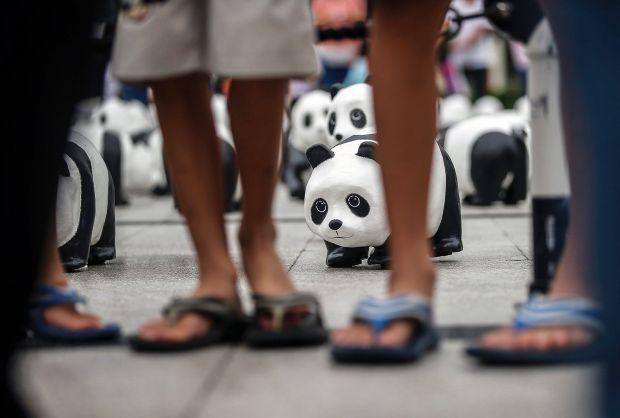 4_panda